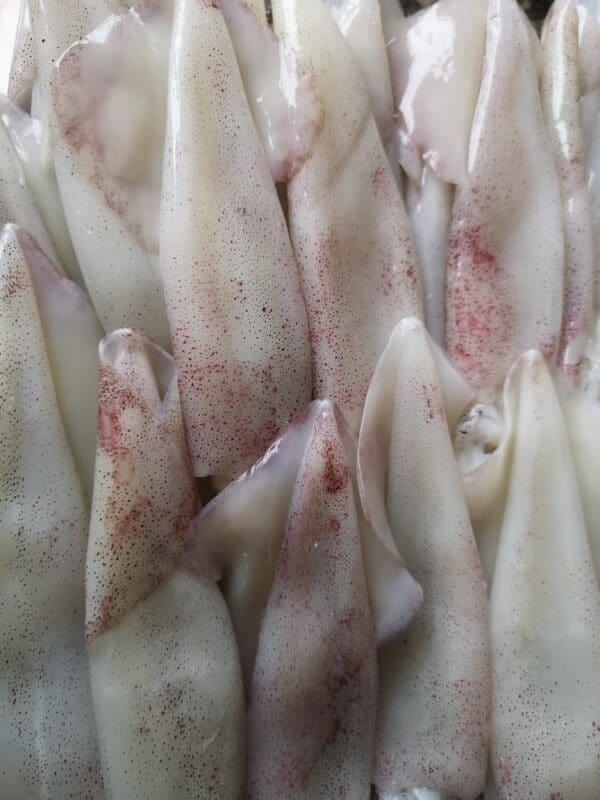 ปลาหมึกสด