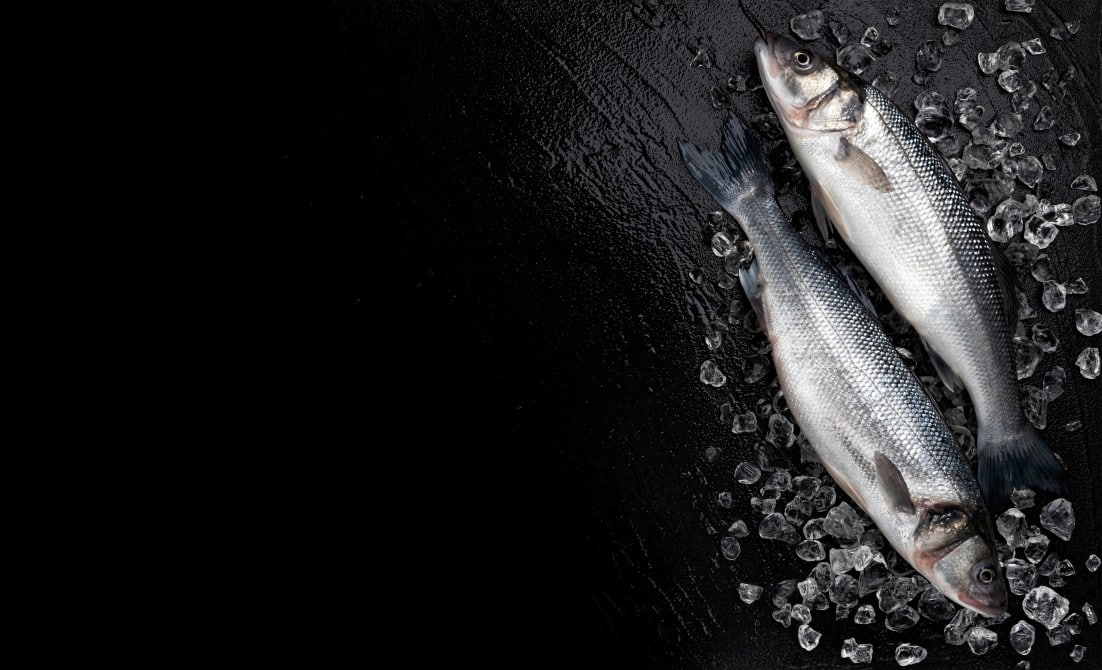 ปลากระพง